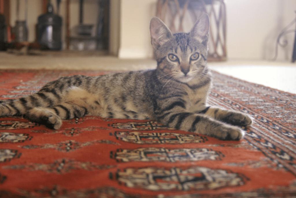 Vacuuming Your Oriental Rug